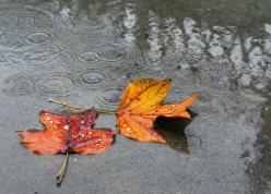 foglie-e-pioggia