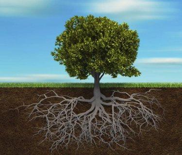 albero-con-radici